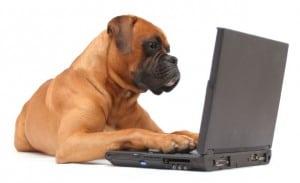 dog using a laptop computer