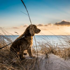 dog at a beach